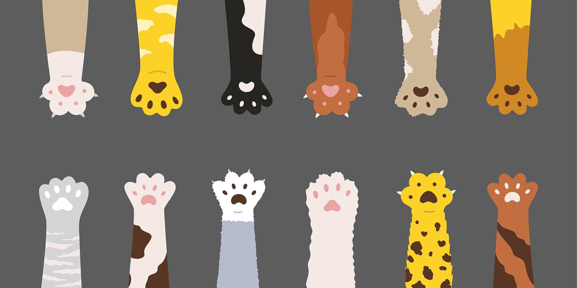 8 ตัวละครสมมติเอาใจทาสแมว มีอะไรบ้างไปดู !!